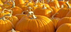 Pumpkins: from the patch, to the porch…to your plate!