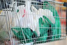 South Korea bans single-use plastic bags from major supermarkets